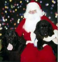 photo:  Newfoundland pup Maggie & Paddy giving Santa their xmas list!