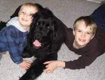 photo:  Newfoundland pup Ceileigh and kids