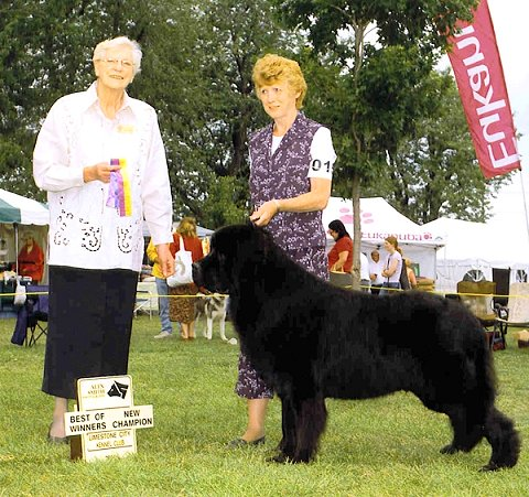 Newfoundland dog: Ch Pattesdouces Cruise To Yahka