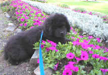 Angus looking ever so cute in the lovely flower bed!