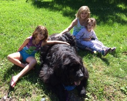 Finnegan hard 'at work' (Therapy Work), visiting with some friends