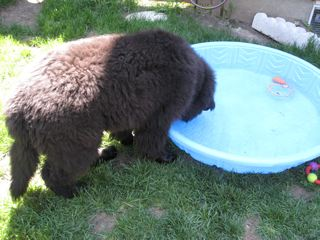 Finnegan trying out his new pool!