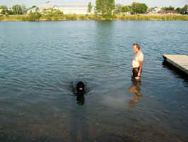 Newfoundland dog image:  Maggie and Larry at the lake