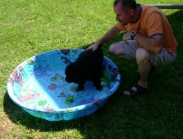 Mathilda (Guinned x Cookie pup) at 9 weeks in her pool