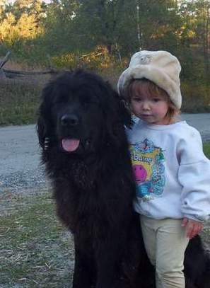 Newfoundland dog photo: An unkempt Rosie (2 years) and Bronwyn  (2 1/2 years old)