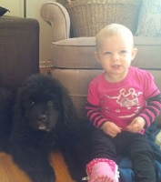 Newfoundland pup: Raven with her best buddy