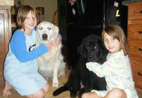 Newfoundland pup Sadie and Golden Retriever Klondike with Katie and Grace