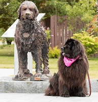 Tillie sitting in front of 'Gander' statue in Gander Memorial Park, Nfld
