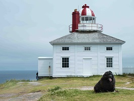 Tillie at Cape Spear, Nfld