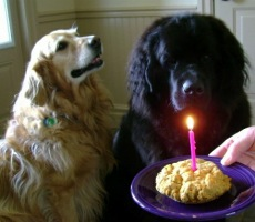 Tillie celebrating her 1st birthday with Monty