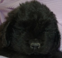 Titanic at 7 weeks old
